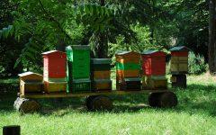 GG 10 giu api e miele all orto botanico