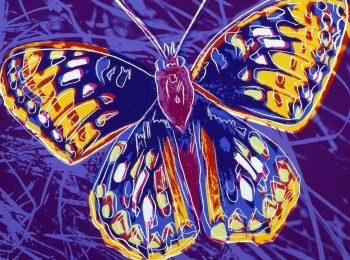 Animali d'artista: Andy Warhol, ali di farfalla