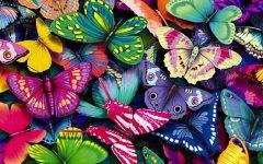 GG il giardino delle farfalle