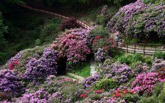 GG oasi zegna in fiore