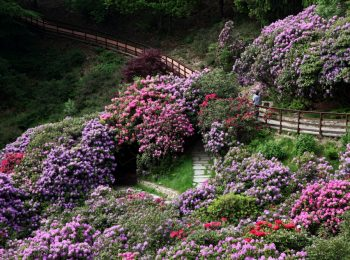 Oasi Zegna in fiore
