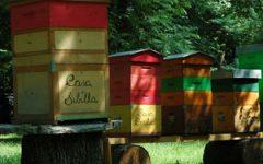 GG 15 lug api e miele all orto botanico