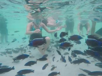 A Zoom il bagno si fa coi piranha. Ma sono vegetariani