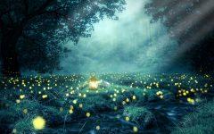 La notte delle lucciole