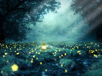 La notte delle lucciole 2018 – Vallombrosa (FI)