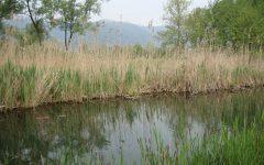 GG 22 set sul lago argentato