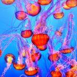 Punture di medusa: ecco cosa fare e cosa non fare