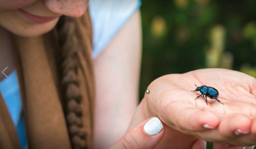 Esapolis: il fascino del museo degli insetti vivi più grande d'Europa