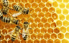 GG che lavoro piccola ape