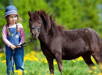 A spasso con i pony