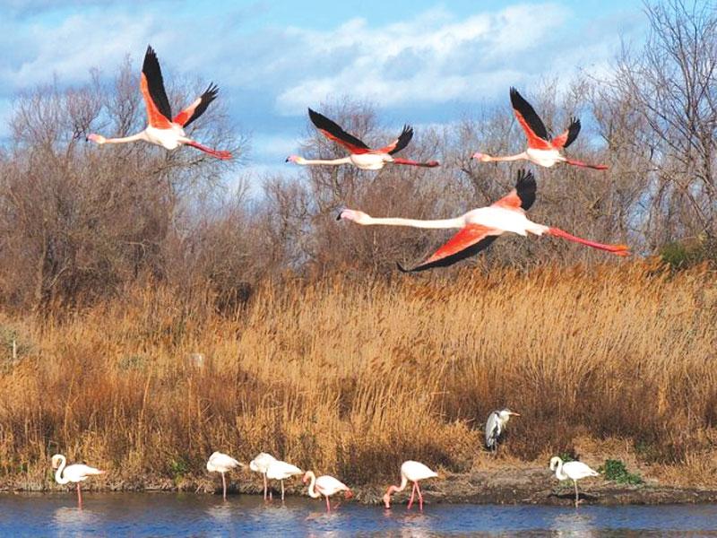 GG birdwatching formato famiglia6