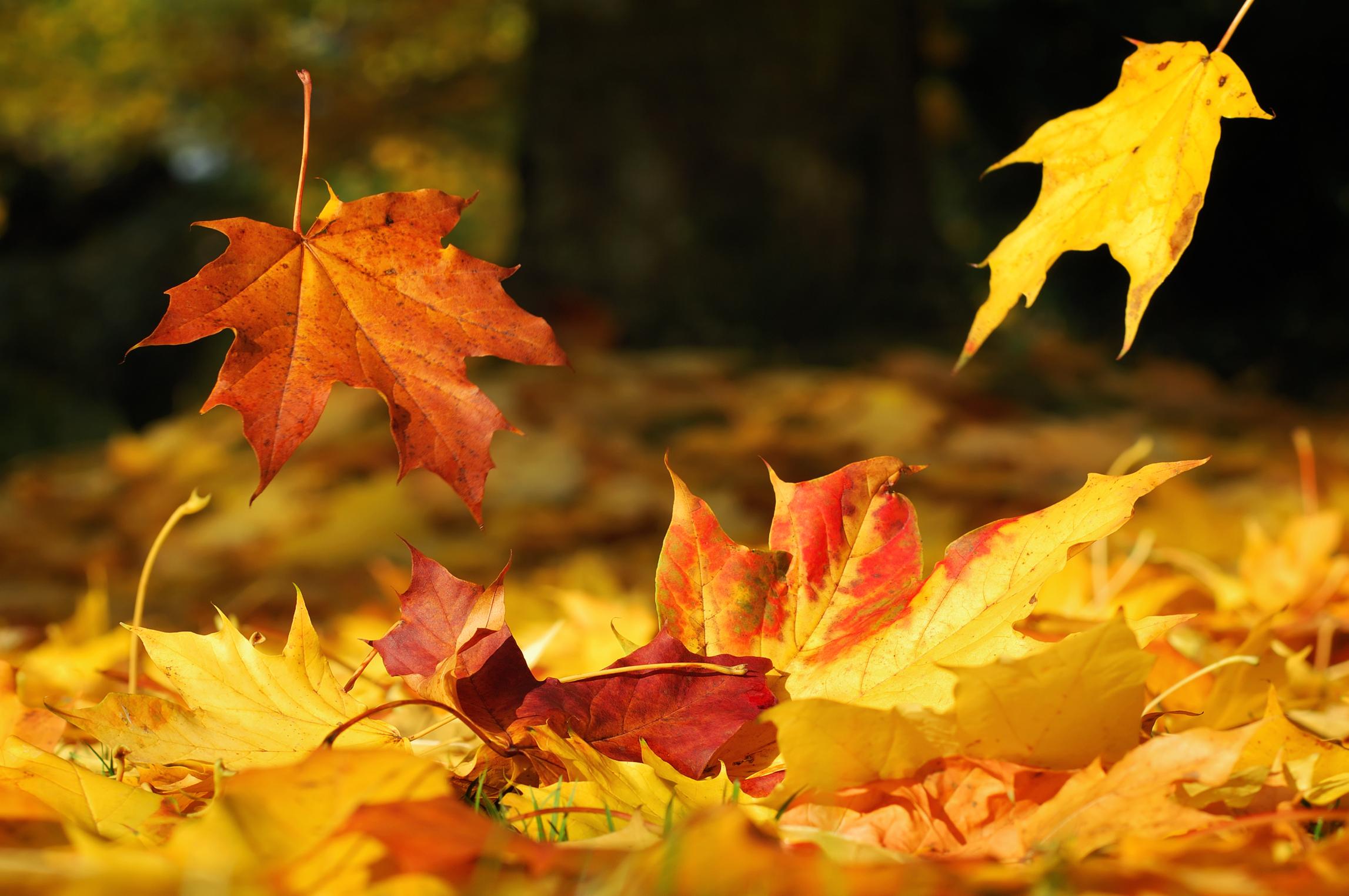 Oasi Zegna in novembre, immersi nelle foglie colorate