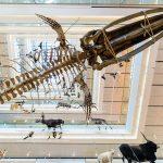 GG muse museo delle scienze trento