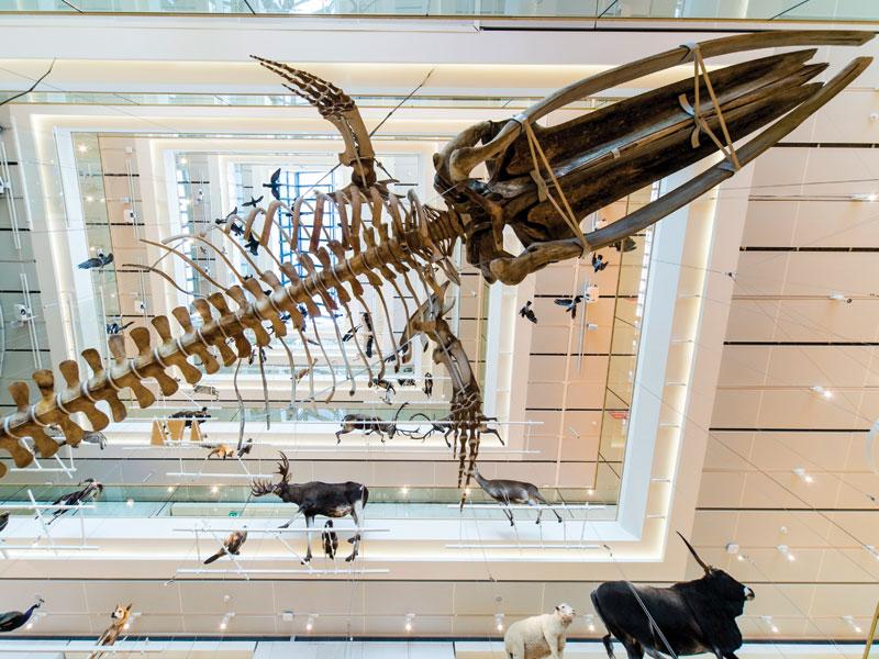 MUSE - Museo delle Scienze - Trento