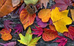 GG festa autunno piossasco
