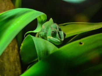 Kryptòs, una mostra di animali stupefacenti all'Ecomuseo del Freidano