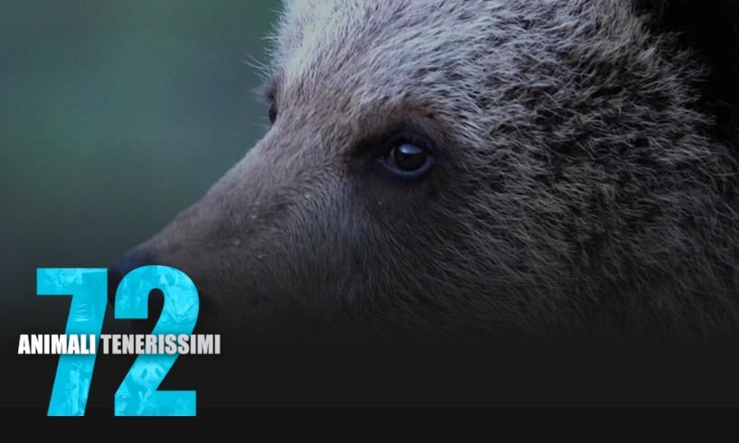 Documentari Netflix - 72 animali tenerissimi