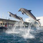 All'Acquario di Genova gratis da Torino e Milano