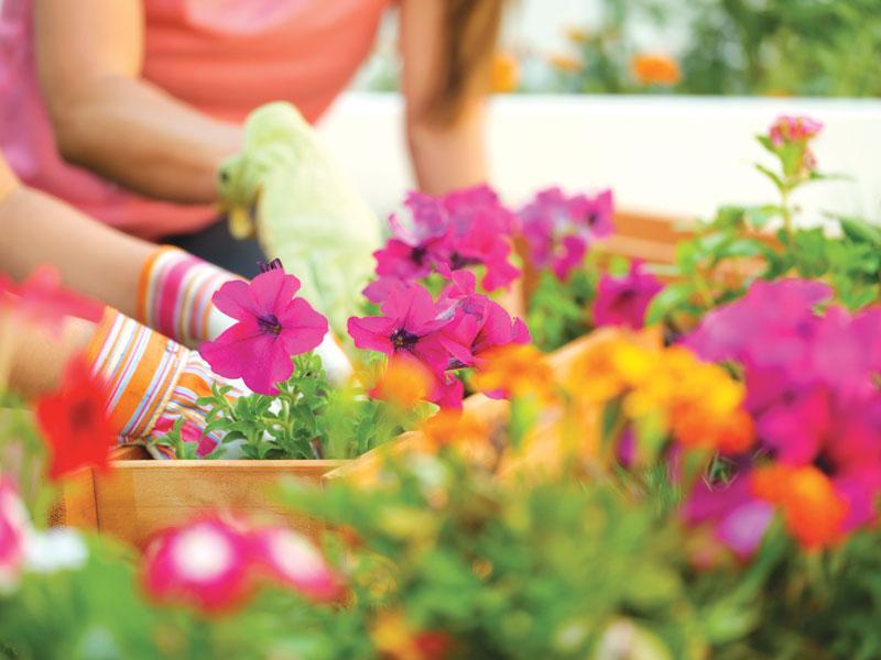 Come curare il giardino di famiglia