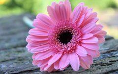 Gentilezza e auto-gentilezza gg givoanigenitori