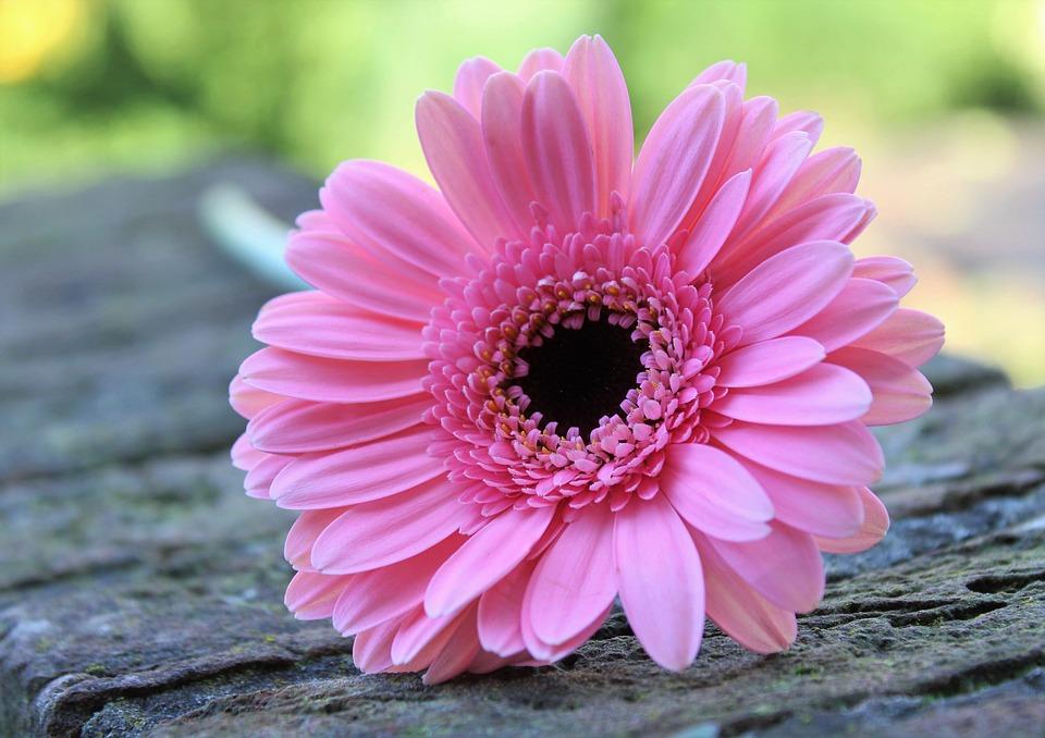 La gentilezza è un punto di forza. Mettiamola in pratica!