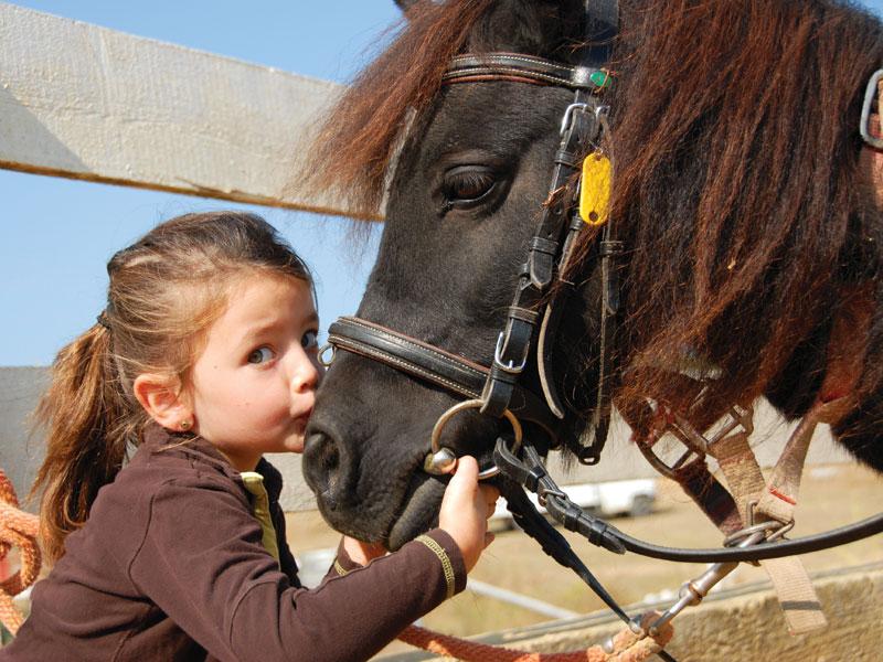 Dove andare per una giornata vicino ai cavalli in Piemonte
