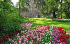 GG messer tulipano 2019