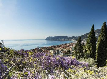 Glicini in fiore a Villa della Pergola ad aprile