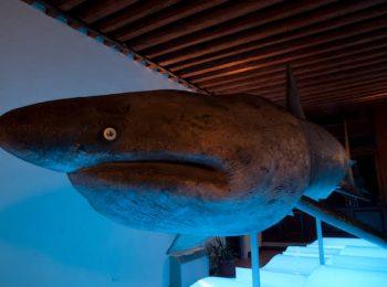 Museo della Laguna Sud e Museo G. Olivi – Chioggia (VE)