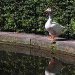 Giugno in Orto Botanico di Torino, tra flora e fauna ronzante_copia