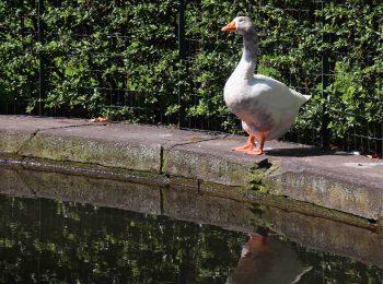 Giugno in Orto Botanico di Torino, tra flora e fauna ronzante