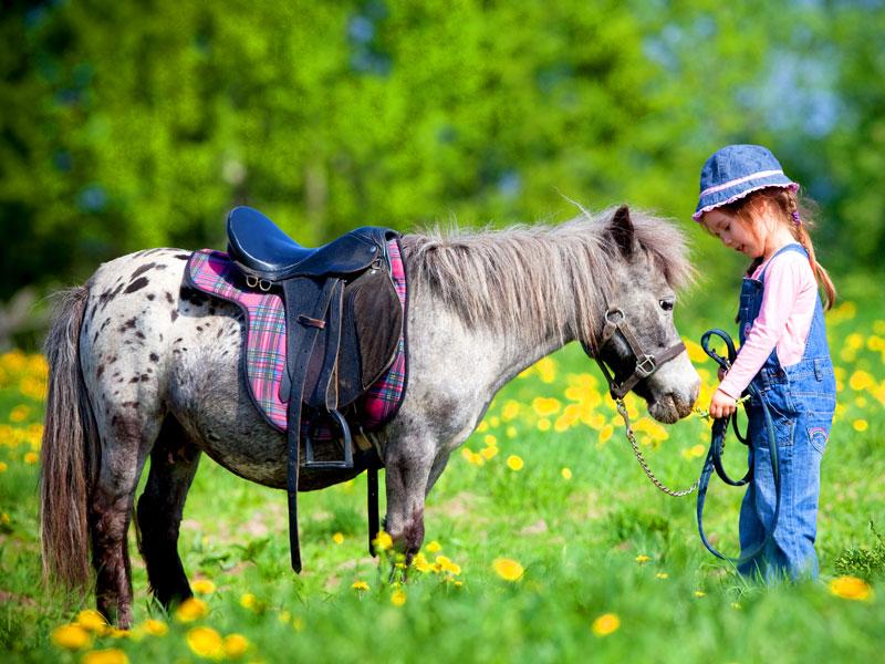 English summer camp: natura, sport e pony