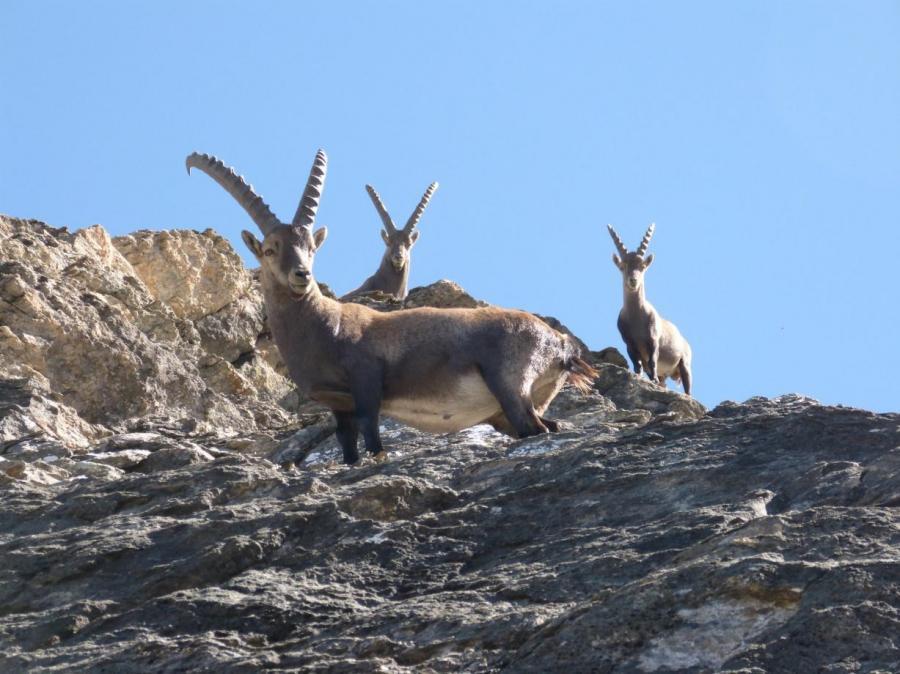 GG parchi delle alpi cozie a settembre1