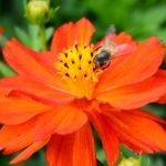 Settembre in Orto Botanico di Torino, tra flora e fauna ronzante_copia