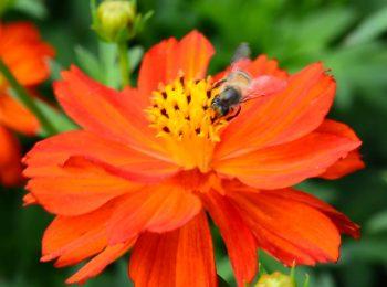 Settembre in Orto Botanico di Torino, tra flora e fauna ronzante