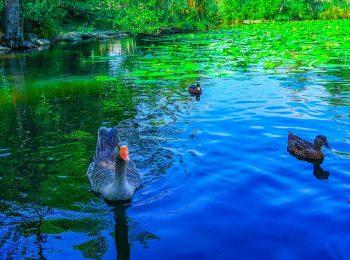 In gita al lago Segrino