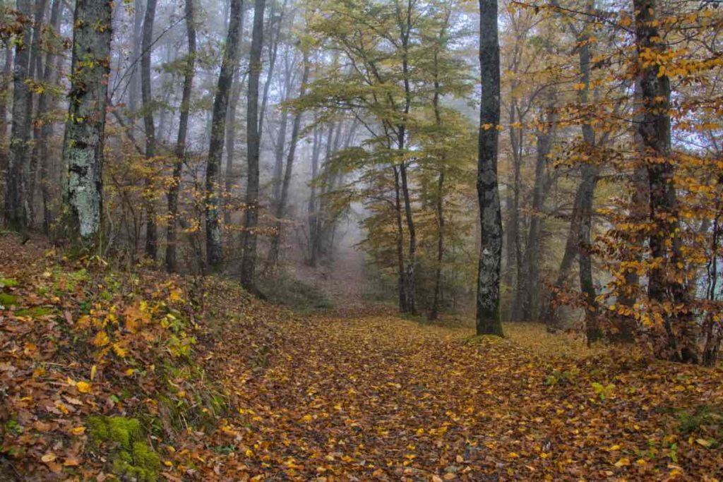 GG cascina santa brera ottobre1