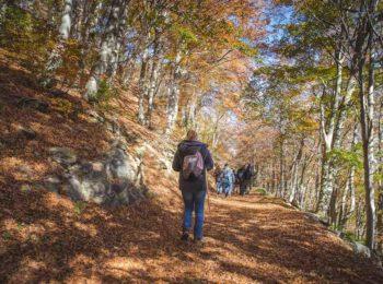 Oasi Zegna in ottobre è Foliage