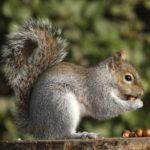 Ottobre in Orto Botanico di Torino, tra flora e fauna ronzante