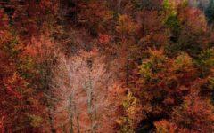 GG oasi zegna in novembre