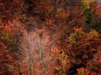 Oasi Zegna in novembre, immersi nella natura