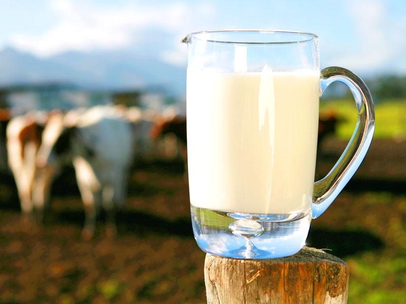 filiera latte italiano
