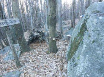 La parola selvatica e il geopoeta