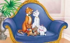GG la citta dei gatti edizione 2020