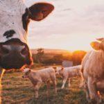 Attenzione alla carne che costa poco: meglio poca ma buona
