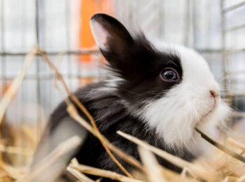 Conigli nani ad aprile alla Fattoria del Toce