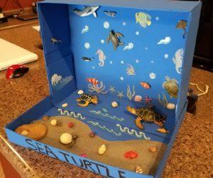costruire ambiente marino