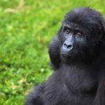 Viaggiare da casa: 5 webcam per osservare gli animali