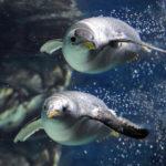 Acquario di Genova: i bambini entrano gratis
