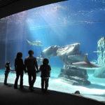 Acquario di Genova: i bambini gratis